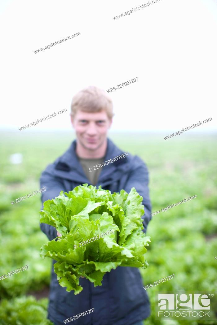 Stock Photo: Young man presenting organic head of lettuce on field.