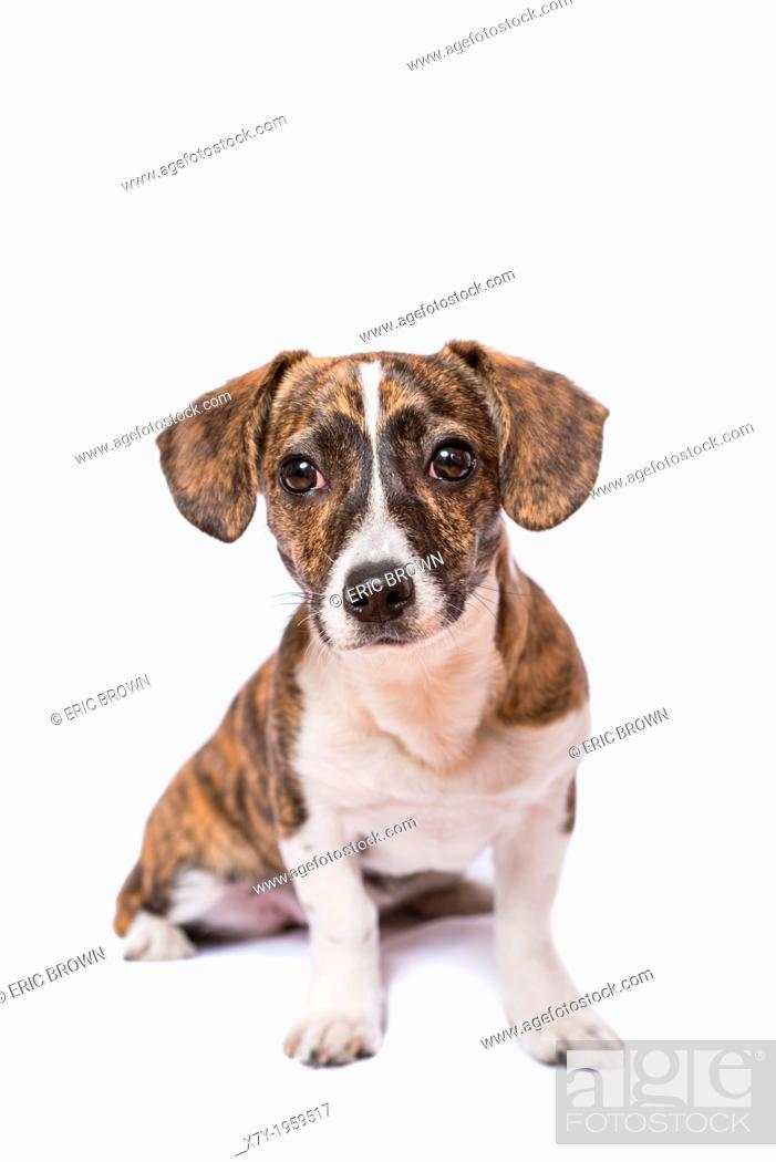 Stock Photo: A puppy in a studio setting.