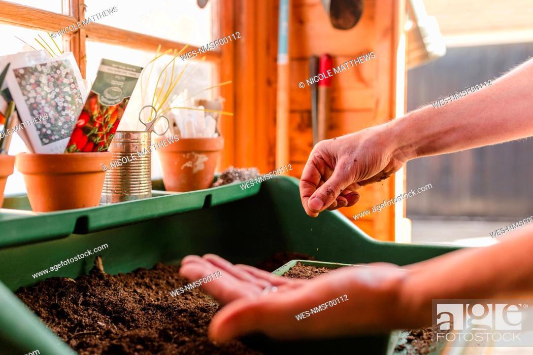Stock Photo: Planting and sowing seeds.
