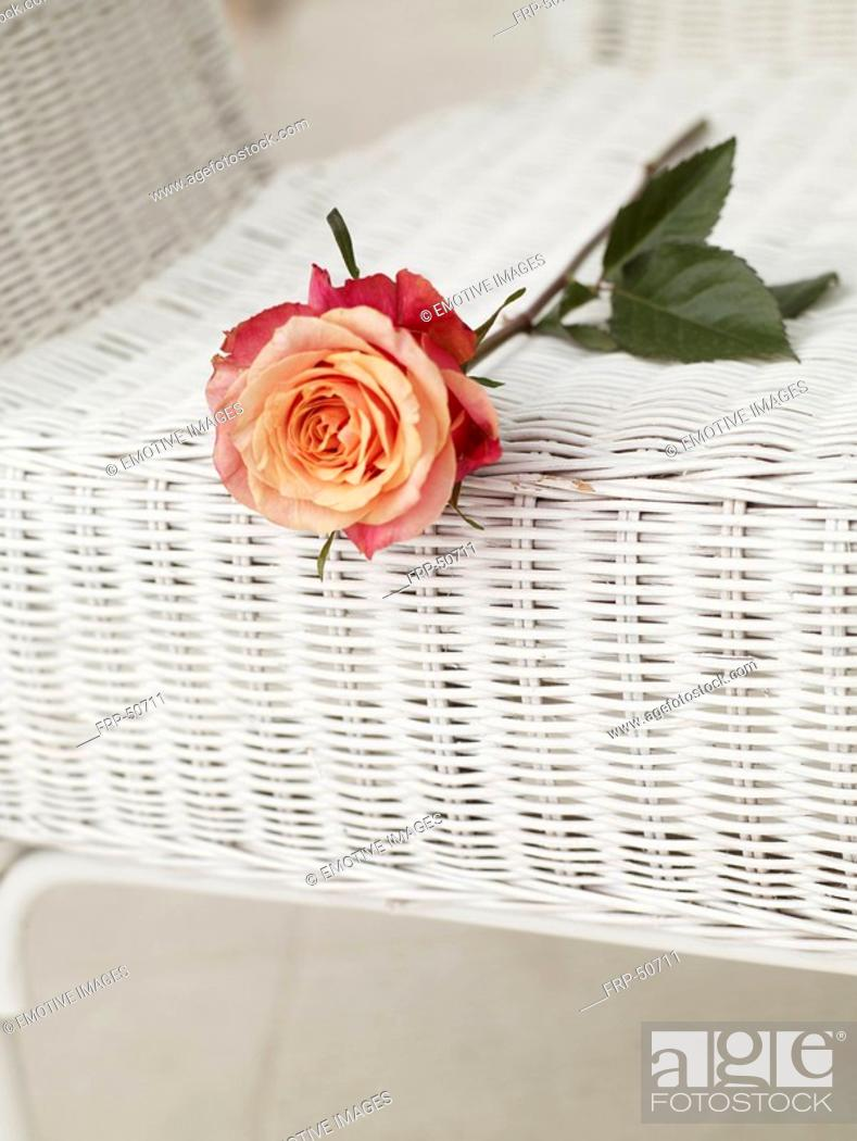 Stock Photo: Rose on a basket chair.