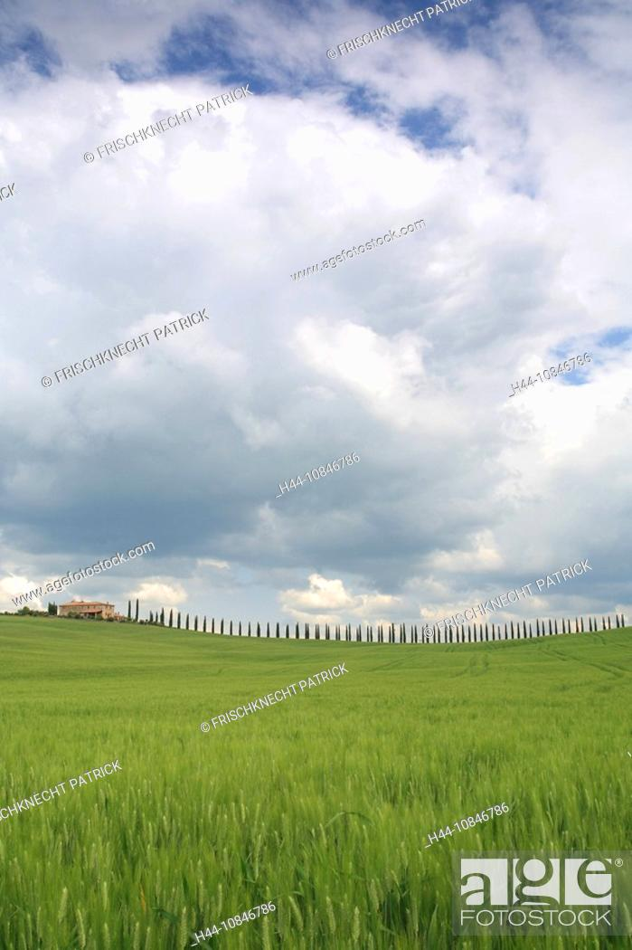 Stock Photo: Italy, Europe, Tuscany, Toscana, hills, hill, scenery, landscape, nature, landscape, grain-fields, cornfields, cypress.