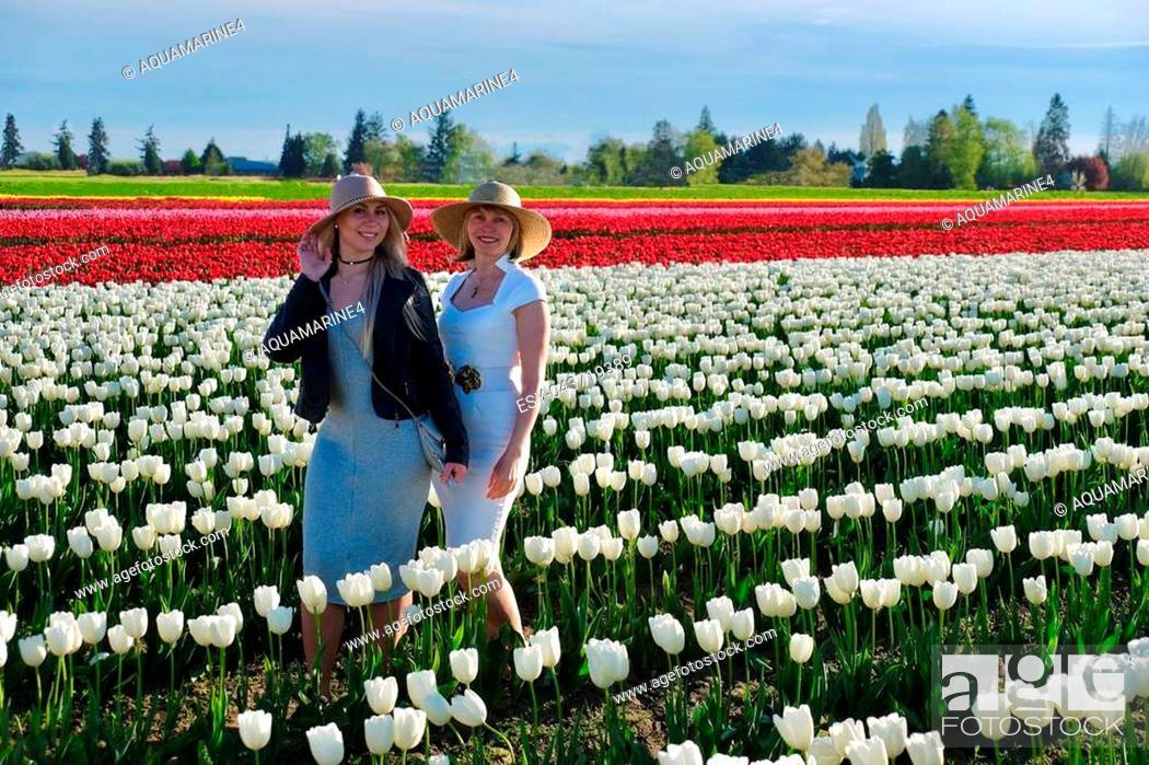 Stock Photo: Skagit Valley Tulip festival. Seattle. Mount Vernon. WA. United States.