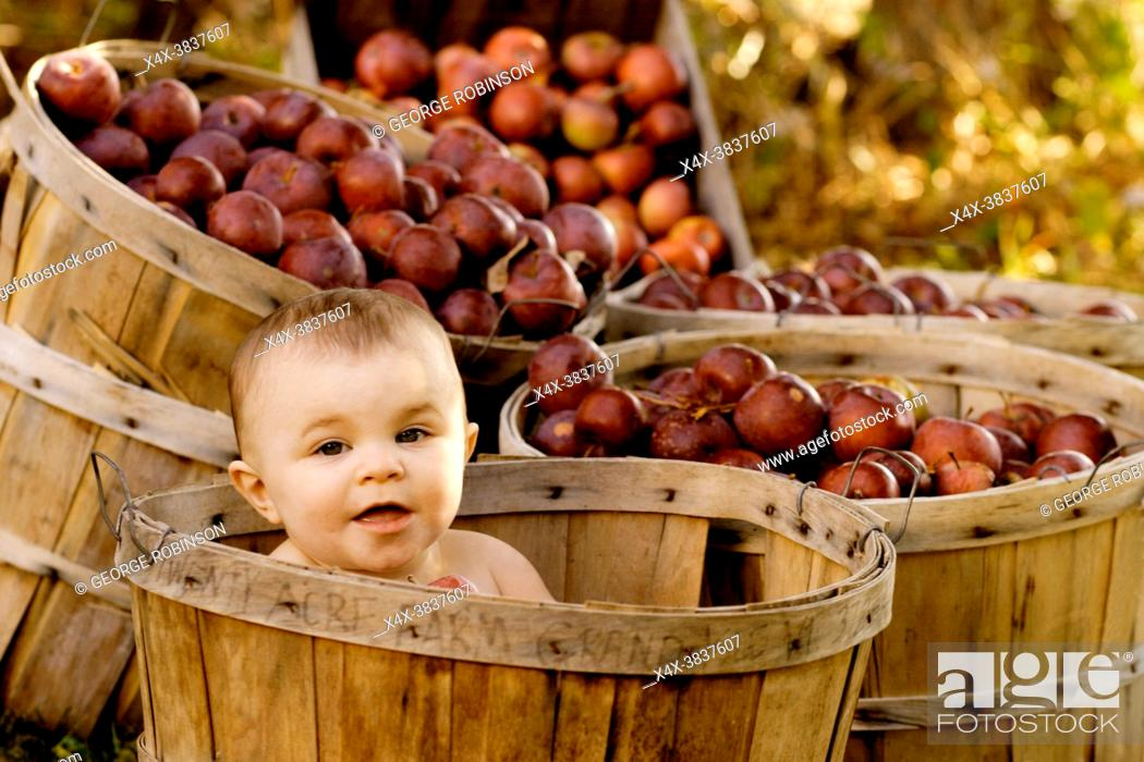 Imagen: Baby girl in a apple basket at the Twenty Acre Farm in Grand Isle, Vermont.