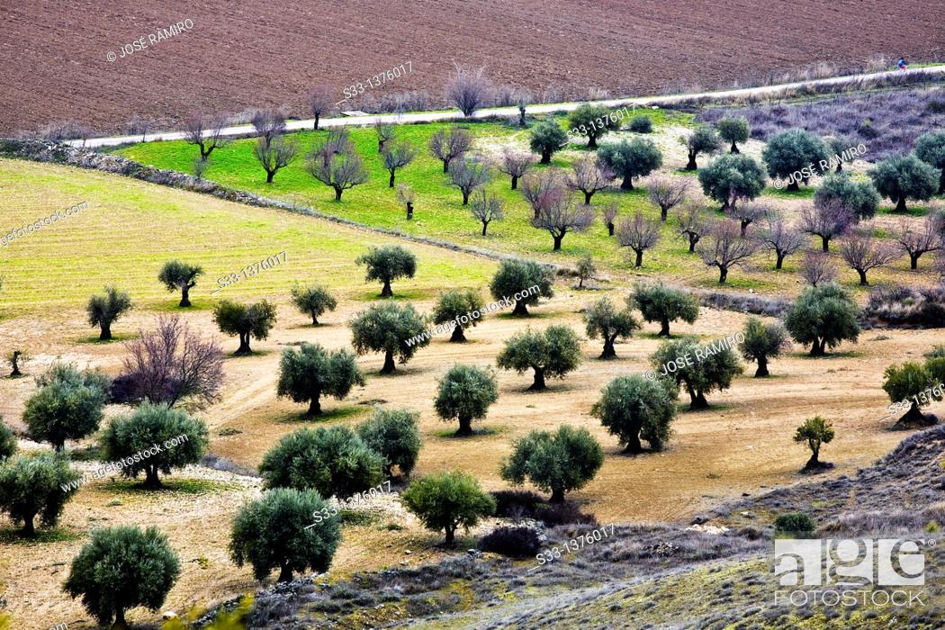 Stock Photo: Roads in the fertile plain on Tajuña river Tielmes  Madrid Spain.