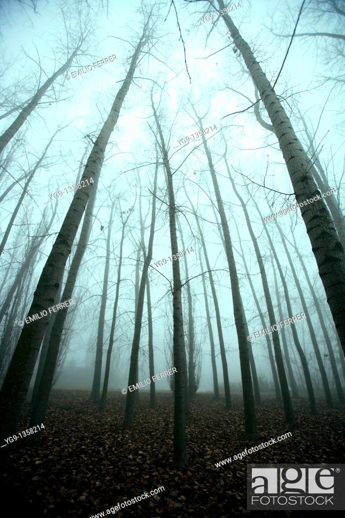 Stock Photo: Trees in Winter with Fog  LLeida  Spain.