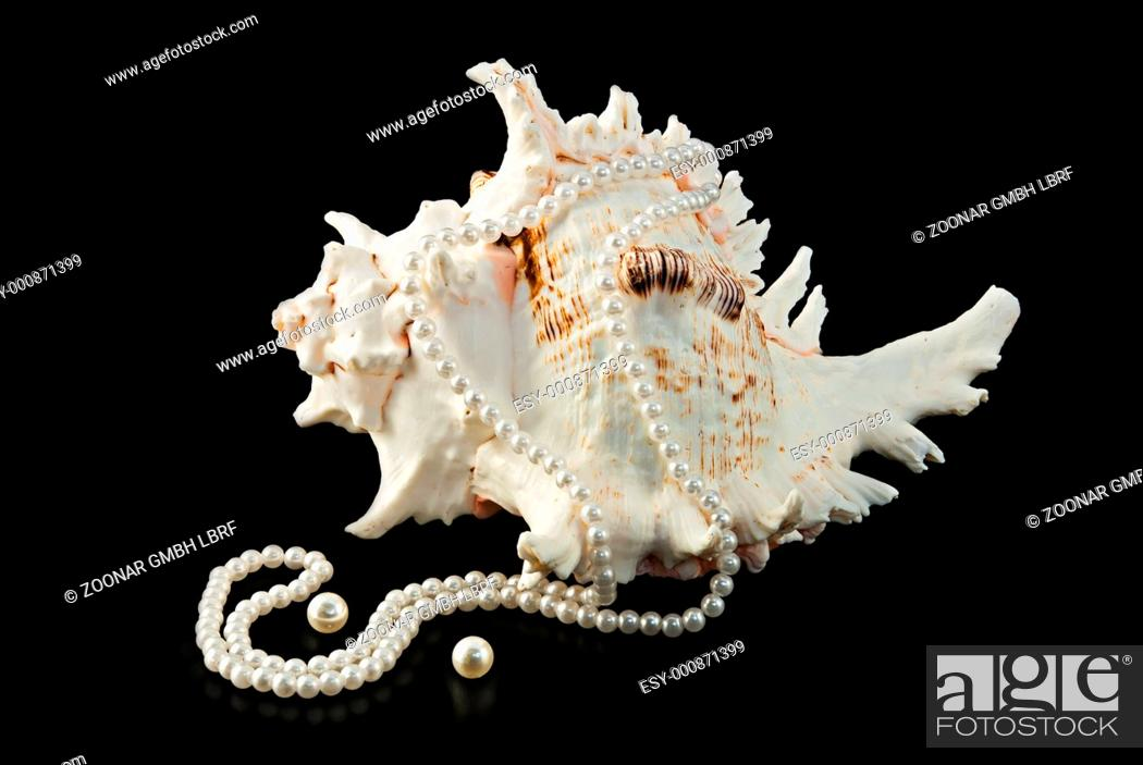 Stock Photo: Sea shells and pearls.