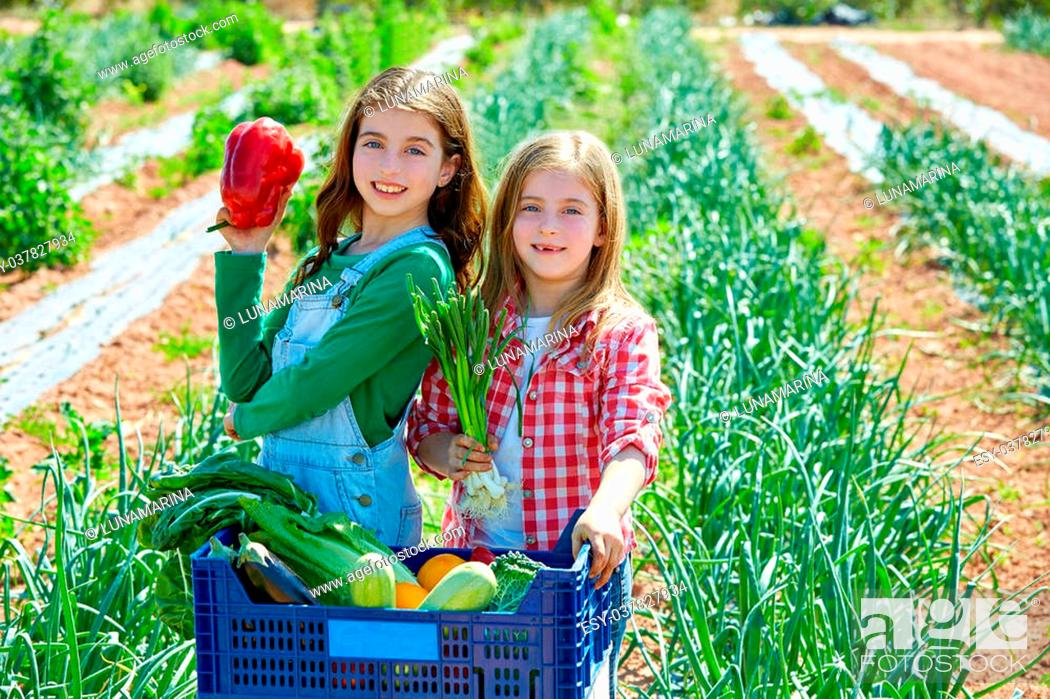 Stock Photo: Litte kid farmer girls in vegetables harvest at orchard.