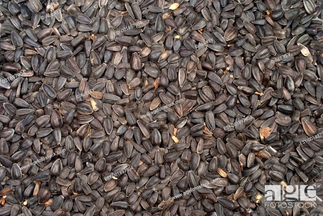 Stock Photo: sunflower seed.
