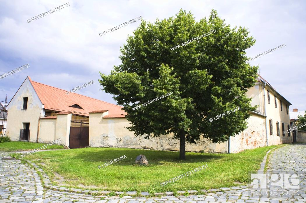 Stock Photo: The Small-leaved Lime, Tilia cordata, tree of the millennium, was planted on September 30, 2000, near the St. Wenceslas Church in Hulin, Zlin Region.
