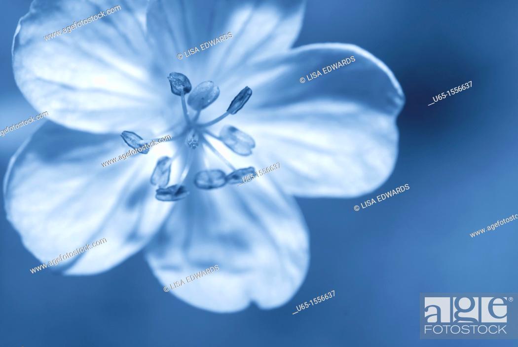 Stock Photo: Wildflower.