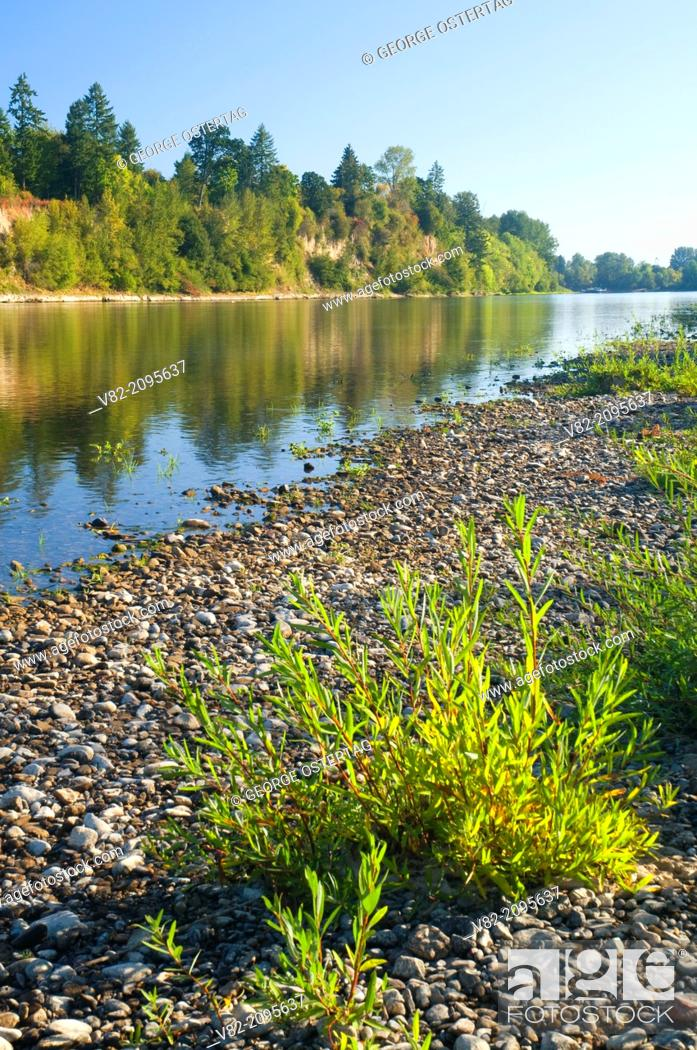 Stock Photo: Willamette River, Willamette Mission State Park, Oregon.