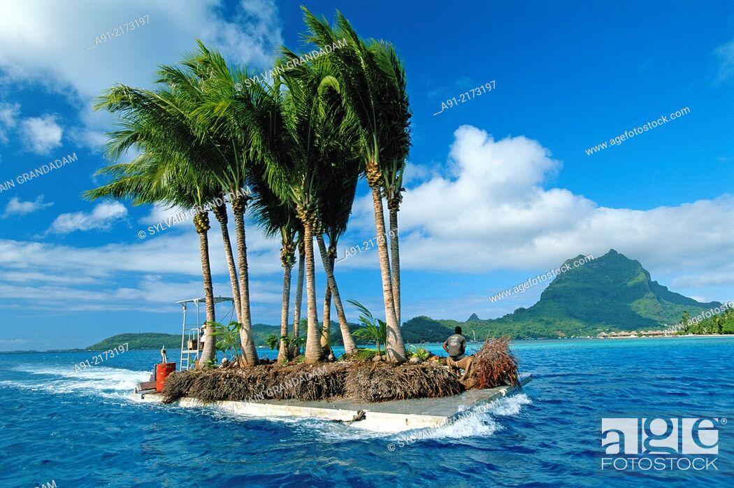 Stock Photo: French Polynesia, Bora Bora, Man transporting palm trees on barge.