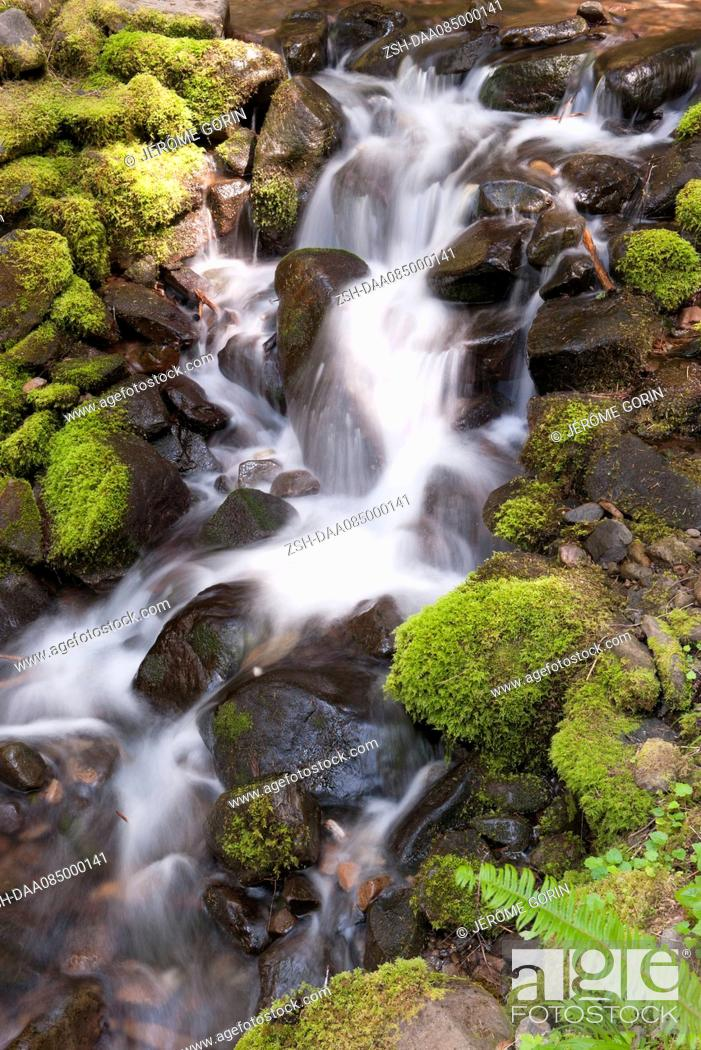 Stock Photo: Water flowing over mossy rocks, Olympic National Park, Washington, USA.