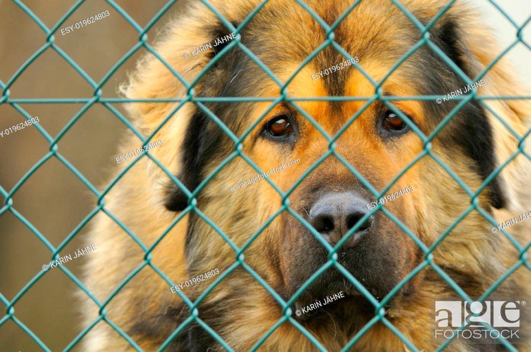 Stock Photo: Hund.