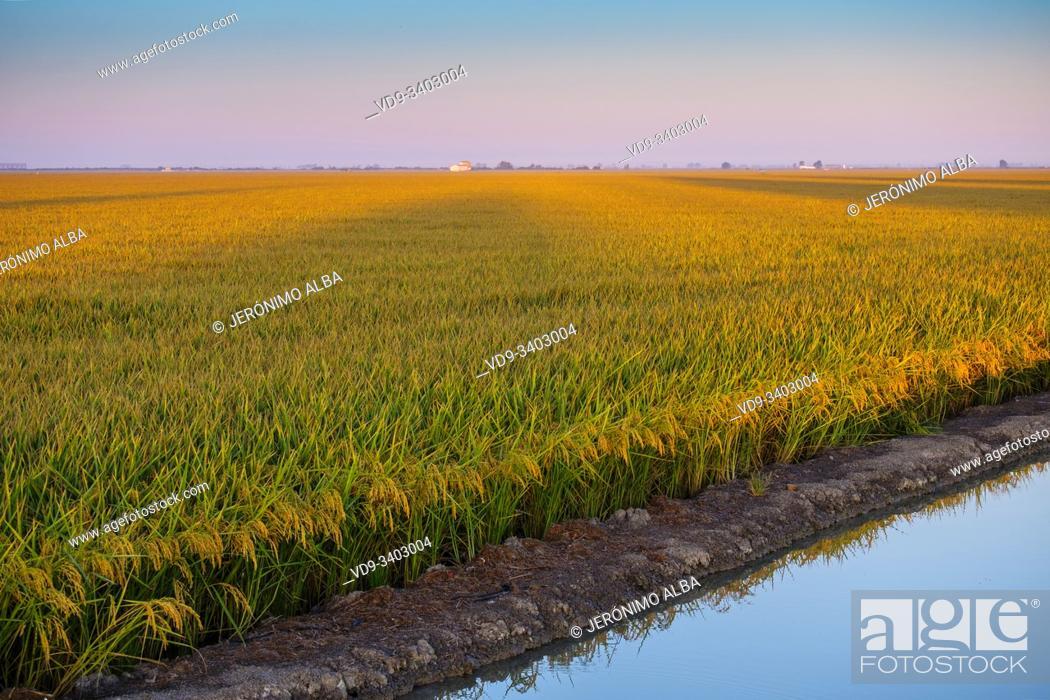 Stock Photo: Sunrise. Rice fields in the Guadalquivir river delta near Los Palacios y Villafranca, Sevilla province. Southern Andalusia, Spain. Europe.