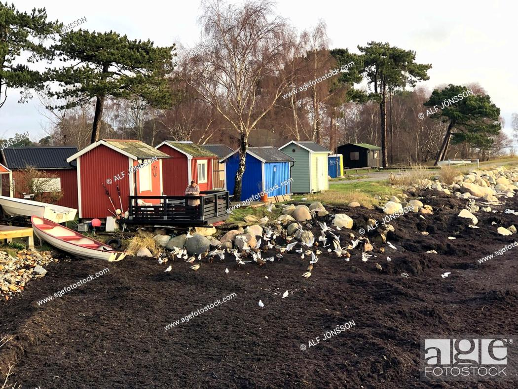 Stock Photo: Seaweed with seagulls at fishing huts in Ystad, Sweden, Baltic sea, Europe.