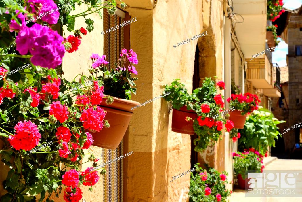 Stock Photo: Flowery alley of Monroyo, Matarraña, Teruel, Spain.