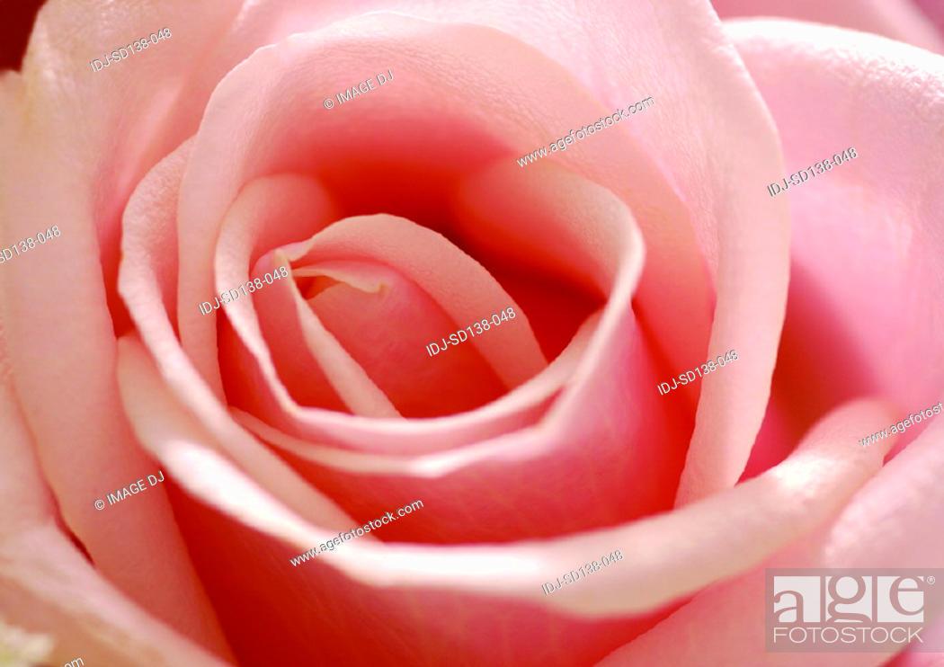 Stock Photo: Close-ups of Flowers.