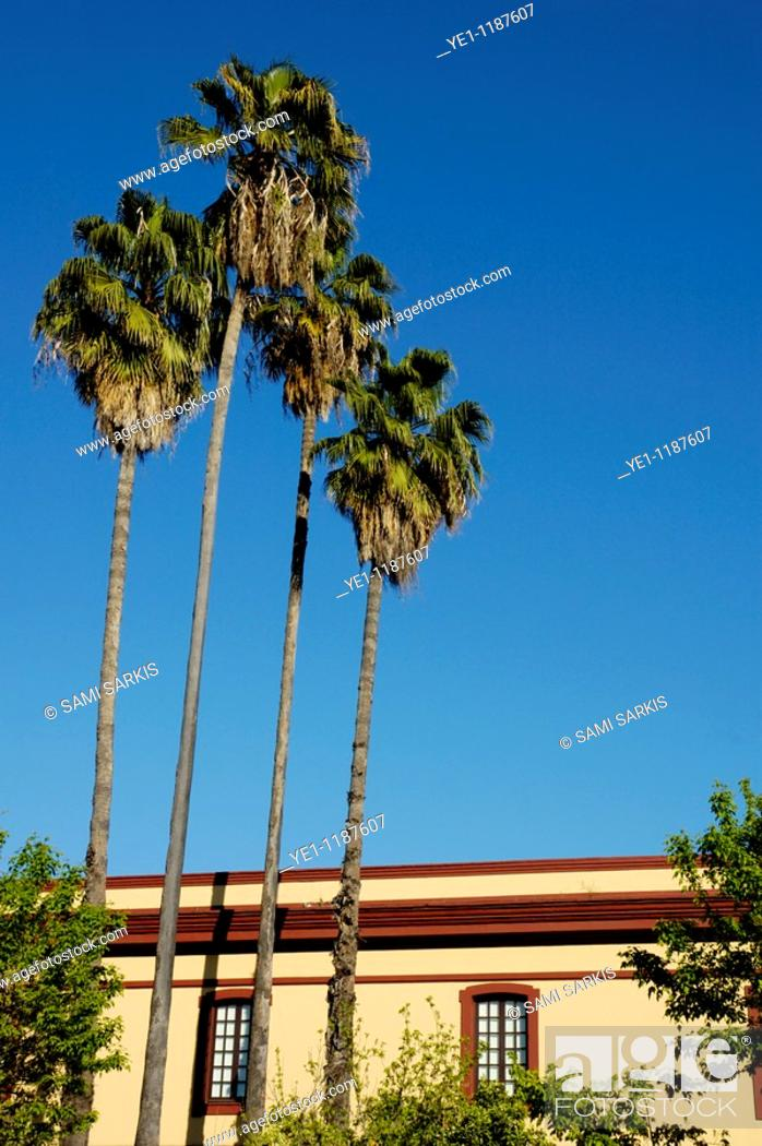 Stock Photo: Date palms and building exterior on Menendez Pelayo Avenue, Seville, Andalusia, Spain.