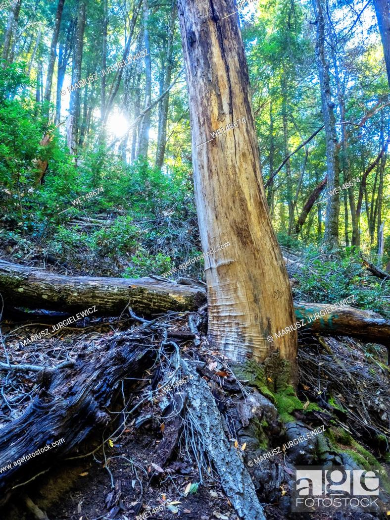 Stock Photo: Castle Rock State Park is a state park located along the crest of the Santa Cruz Mountains. It embraces coast redwood, Douglas fir, and madrone forest.