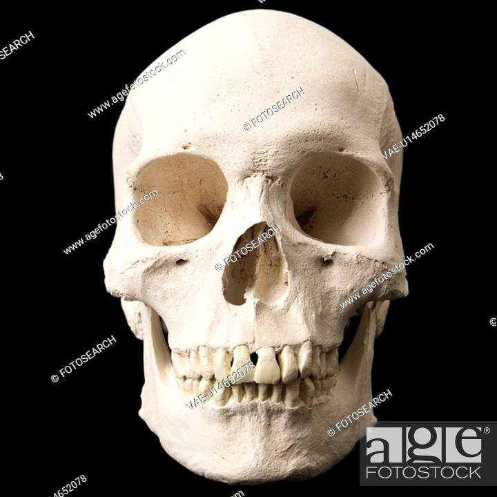 Stock Photo: Human skull with teeth on black.