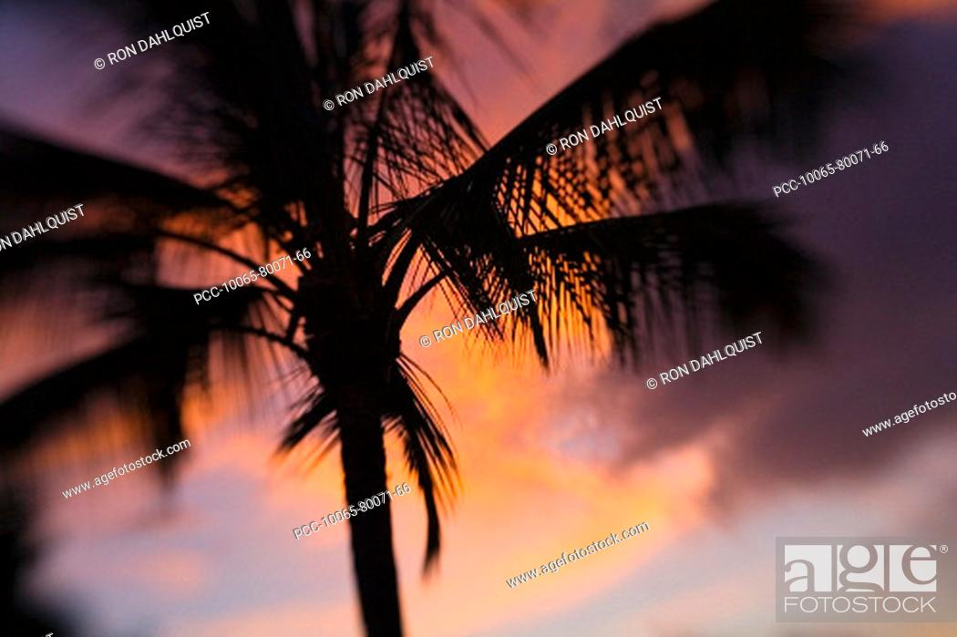Stock Photo: Hawaii, Palm tree silhouette with orange clouds at sunset.