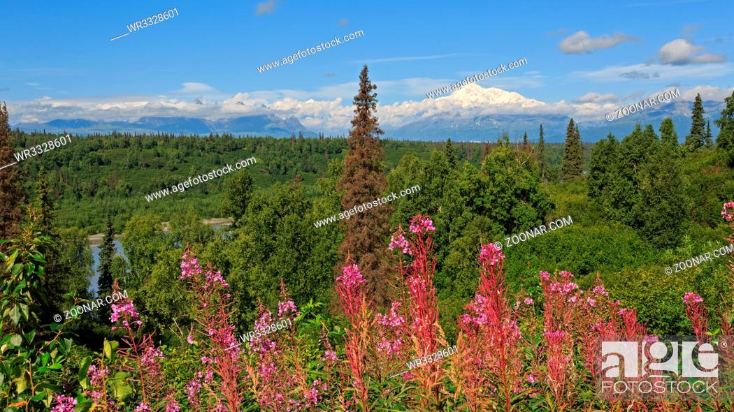 Stock Photo: Panorama des Denali-Massivs in Alaska.