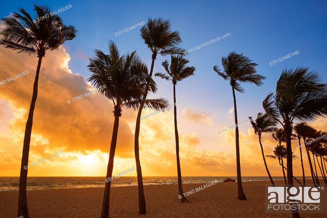 Photo de stock: Fort Lauderdale beach morning sunrise in Florida USA palm trees.