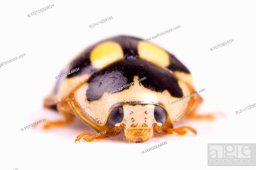 Stock Photo: freigestellt, alfred, animal, animals, beetle, close-up.