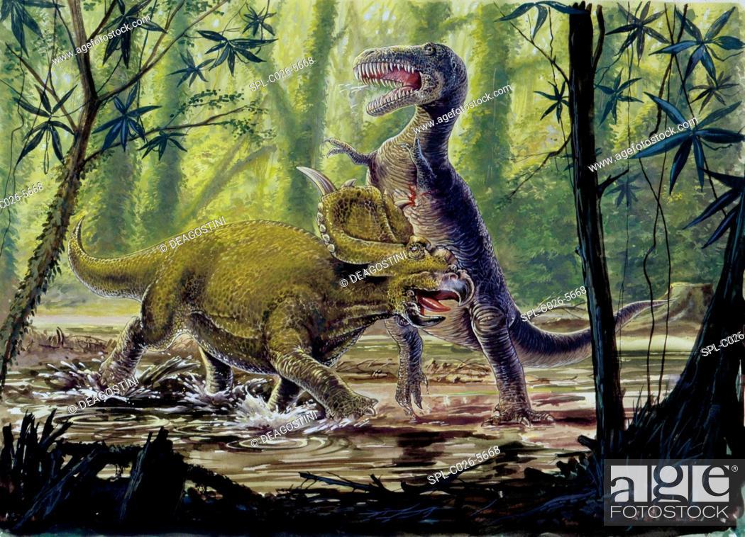 Stock Photo: Pachyrhinosaurus and theropod fighting. Computer illustration of Pachyrhinosaurus sp. (left) and theropod (right) dinosaurs fighting in a prehistoric forest.