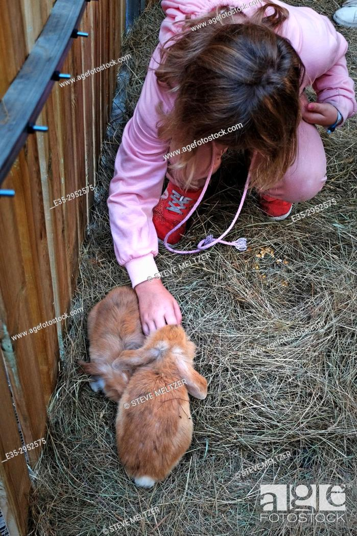Stock Photo: A young girl pets a rabbit at a petting farm in Beziers, France.
