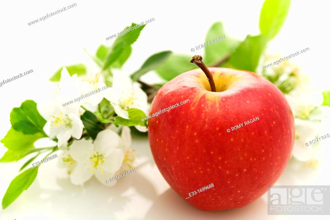 Imagen: Organic apple with apple blossoms.