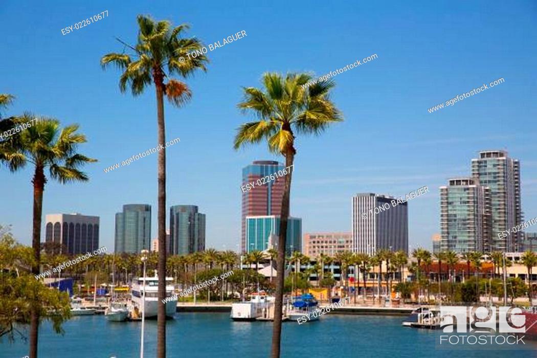 Imagen: Long Beach California skyline from palm trees of port.