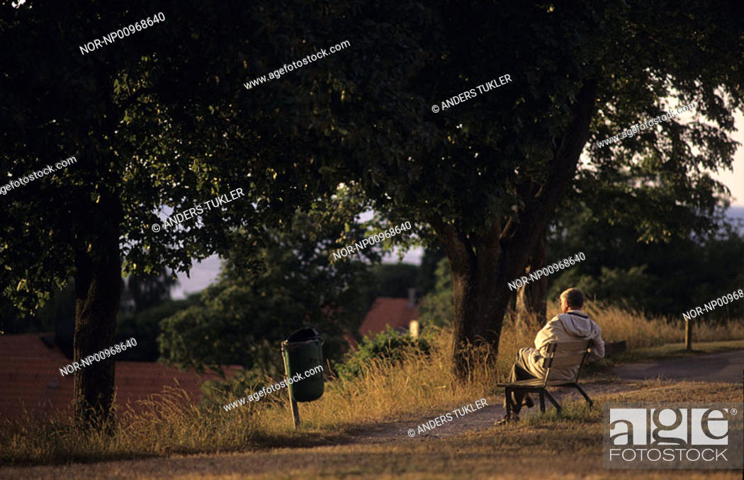 Stock Photo: Rear view of a person sitting on bench in forest.