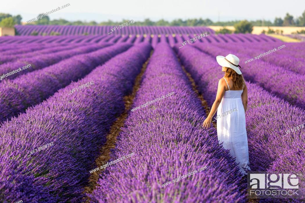 Stock Photo: Woman with hat in a lavender field. Plateau de Valensole, Alpes-de-Haute-Provence, Provence-Alpes-Cote d'Azur, France, Europe.