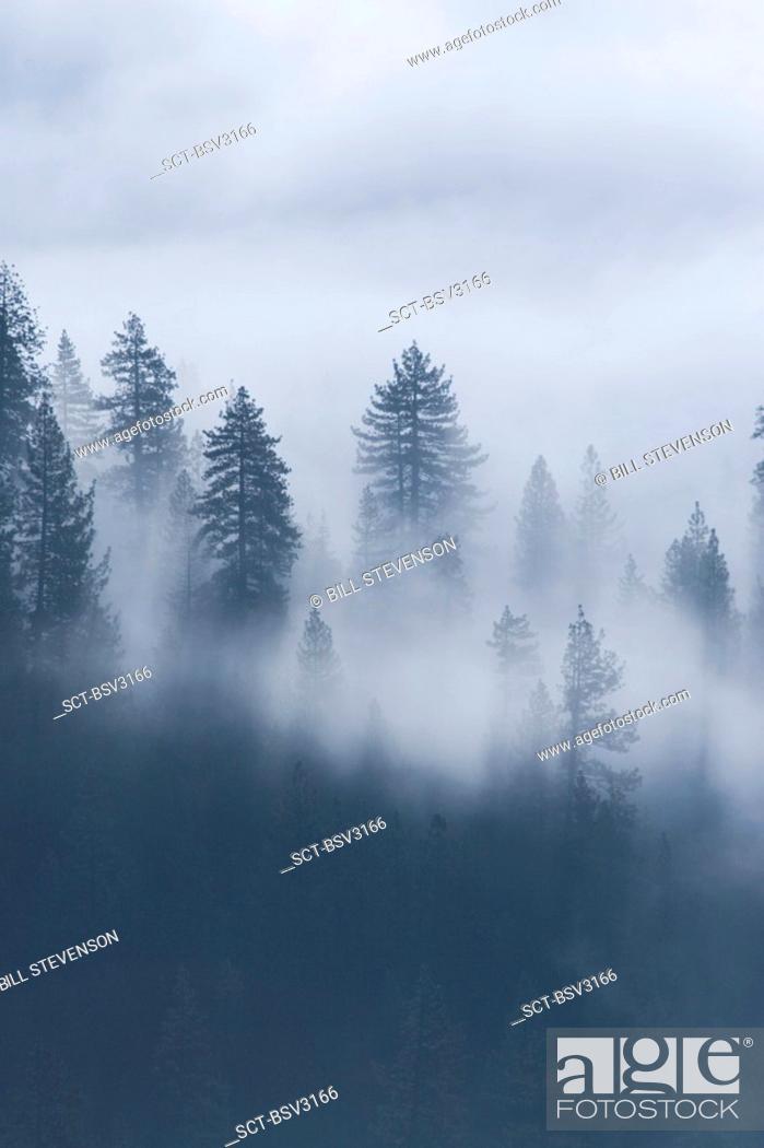 Stock Photo: Trees in fog at Donner Lake in California.