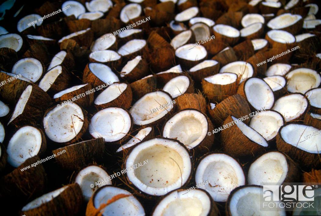 Stock Photo: Coconuts drying in the sun, Costa Rica, Atlantic Coast.