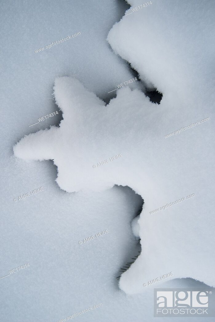 Stock Photo: Abstract shape of twigs of fir covered by snow, white on white with shadow separating.