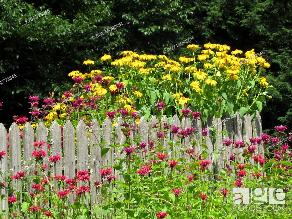 Imagen: yellow coneflower and bee balm.