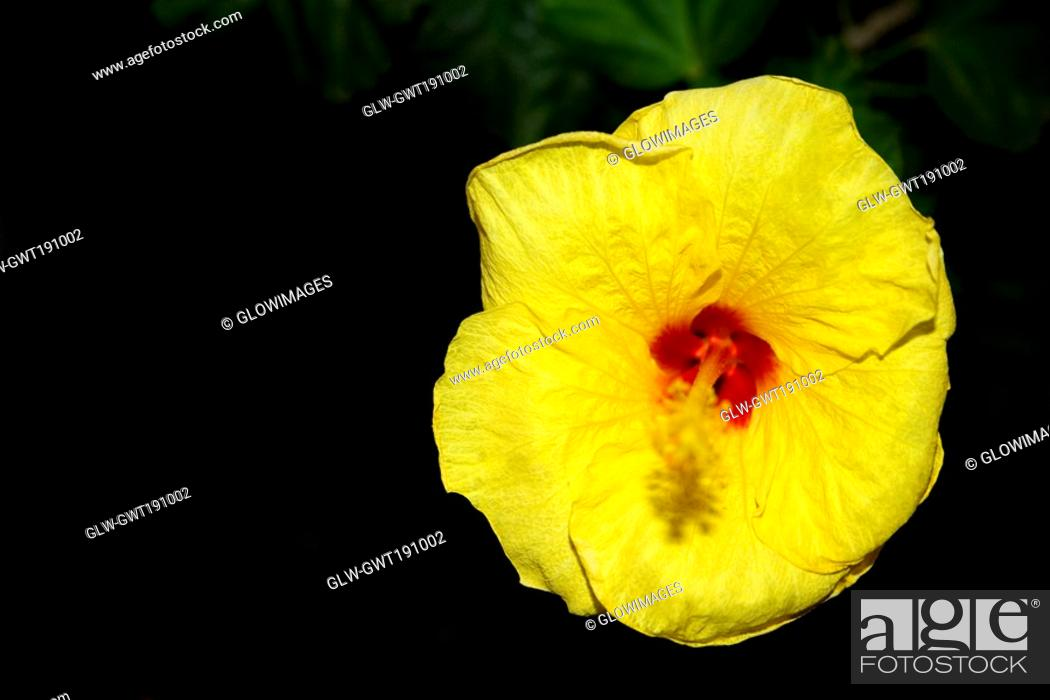 Stock Photo: Close-up of a yellow flower.