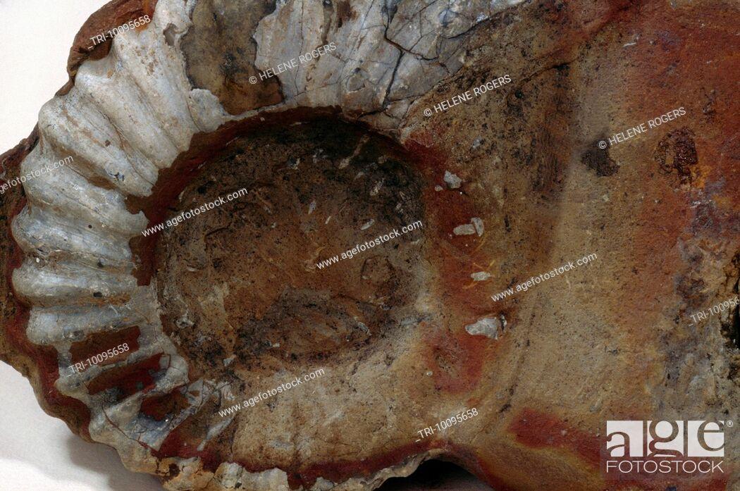 Imagen: Fossil.