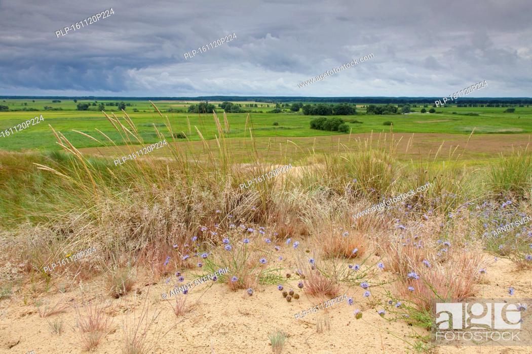 Stock Photo: Inland Dunes by Klein Schmölen near the Elbe river, Mecklenburg Elbe Valley Nature Park / Mecklenburgisches Elbetal, Mecklenburg-Vorpommern, Germany.