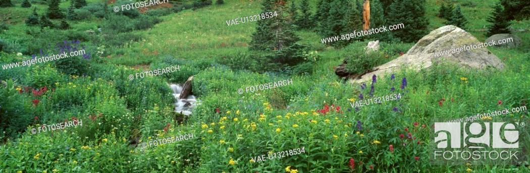 Stock Photo: Stream and Alpine Flowers.