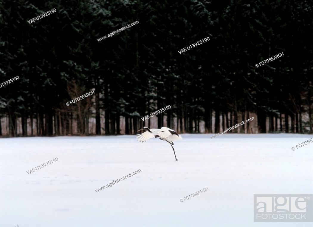 Stock Photo: forest, bird, winter, snow, nature, landscape, animal.