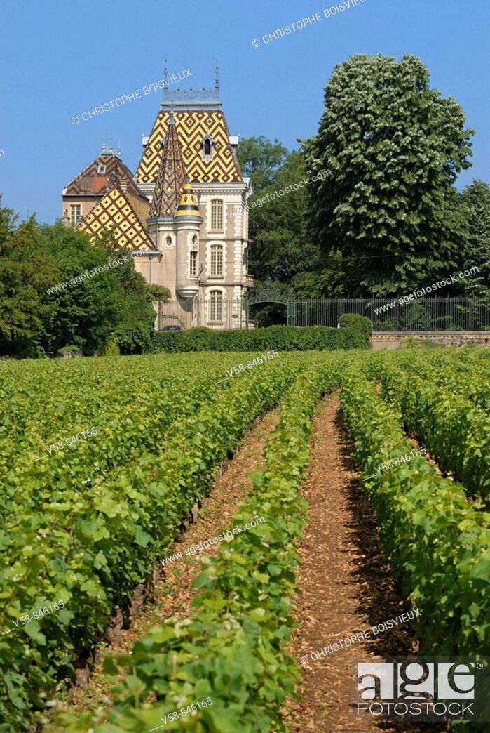 Stock Photo: Vineyard and castle of Aloxe-Corton, Cotes d'Or, France.