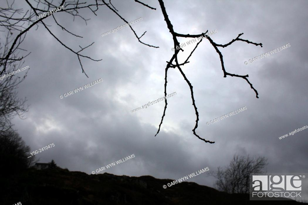 Stock Photo: Hand shaped tree branches and dark sky in countryside in wales great britain uk.