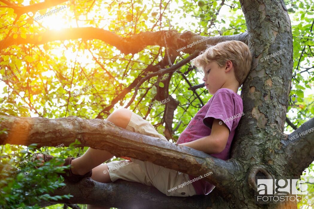 Stock Photo: Boy reading book in tree.