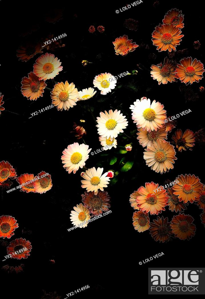 Stock Photo: Still life with daisies.