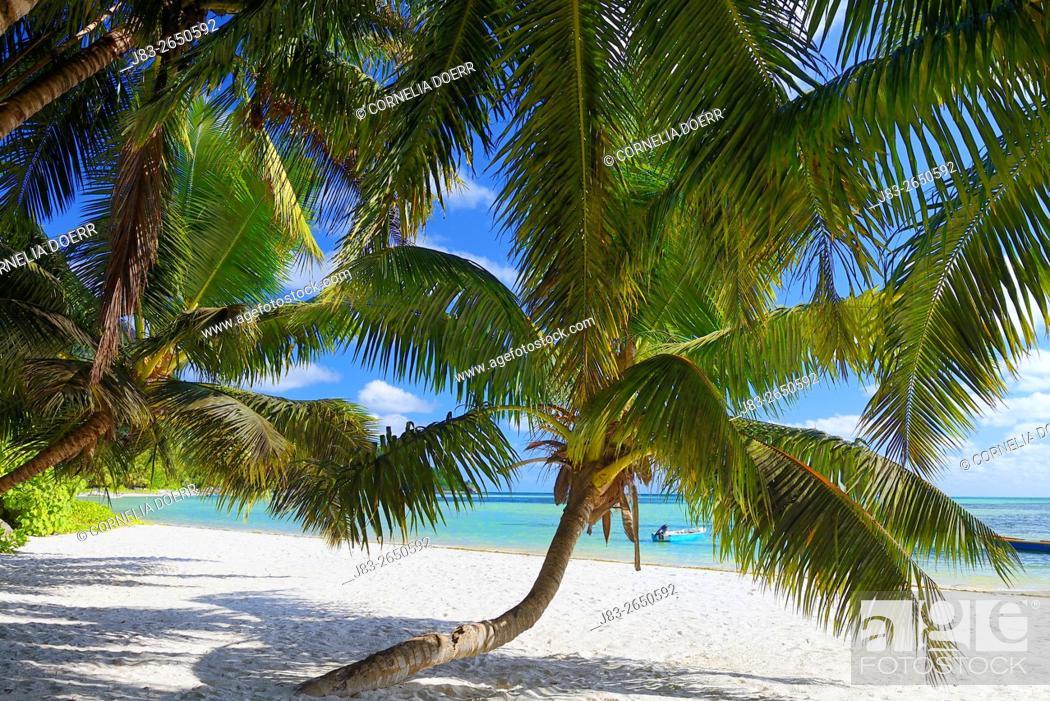 Stock Photo: Tropical Palm Beach, Praslin Island, Seychelles, Indian Ocean, Africa.