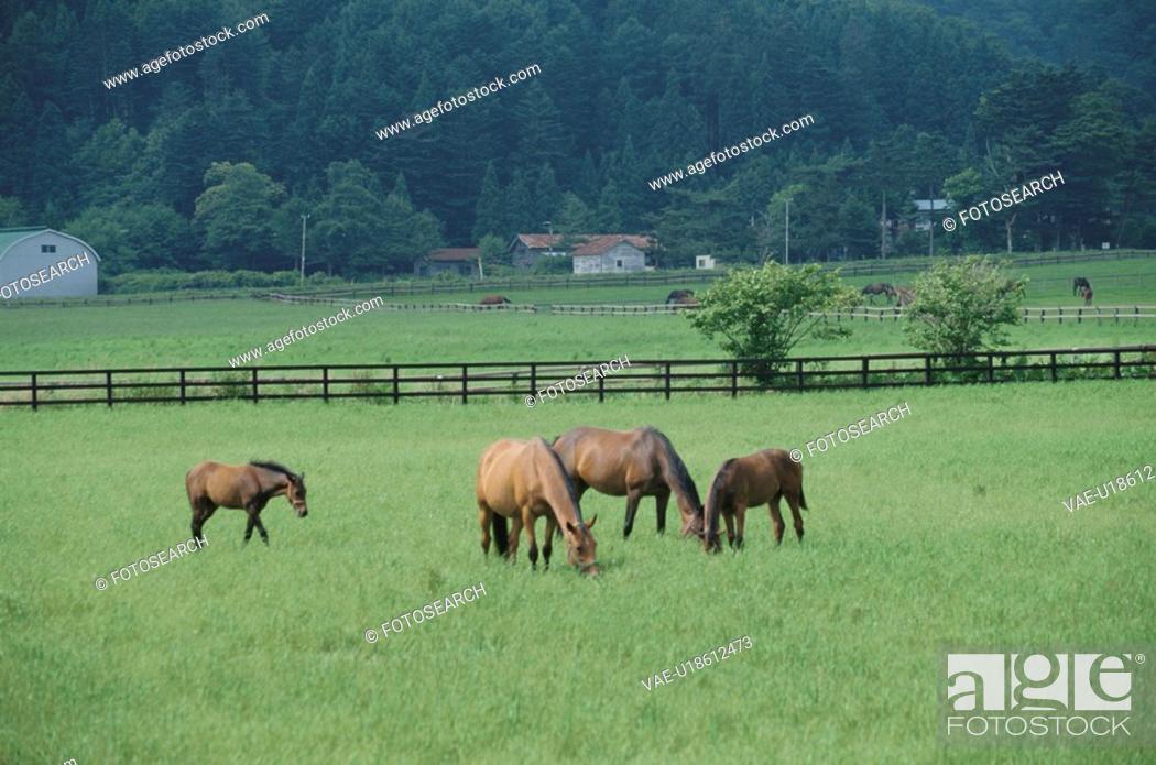 Stock Photo: Four Horses.
